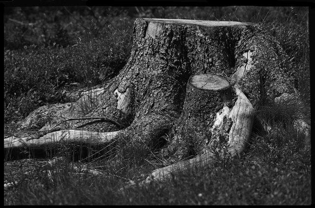 hout2website