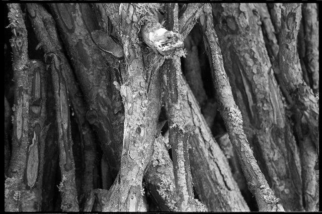 hout3website