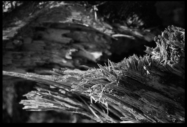 hout4website